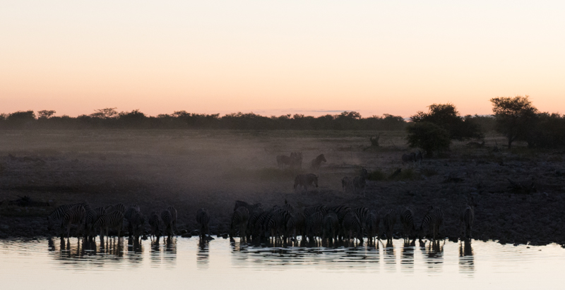 Zebras in Namibia at watering hole