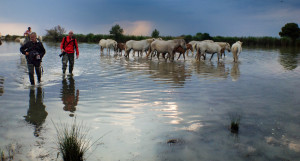 D.A.Wagner and Serge Kroughlikoff with Camargue Horses