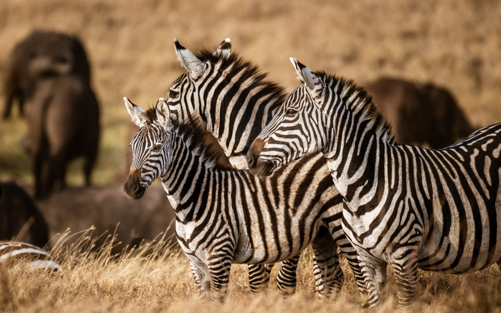 Serengeti National Park by David Mark Erickson at Lightroom Guy website